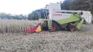récupération de rafle de maïs