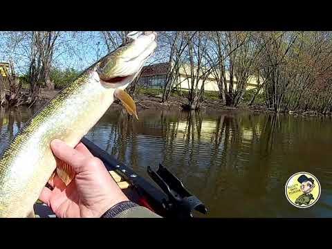 Pike Fishing On The Passaic River NJ
