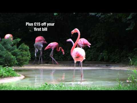 Dancing Flamingo - Primus Saver