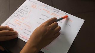 Motricidade Orofacial - Vídeo aula 01 - Sistema Estomatognático e Fisiologia da Sucção.