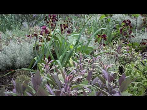 What is a Garden Designer