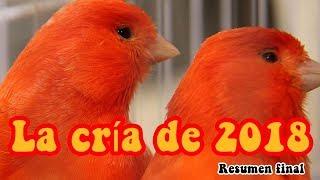 CRIA DE 2018 - RESUMEN FINAL