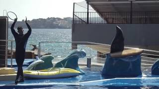 lion sea show in marineland  mallorca