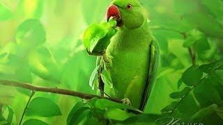 Прекрасная дикая природа Таиланда (2014)(Смотреть Прекрасная дикая природа Таиланда онлайн Документальный фильм Край красоты и невероятных контра..., 2014-04-03T19:03:02.000Z)
