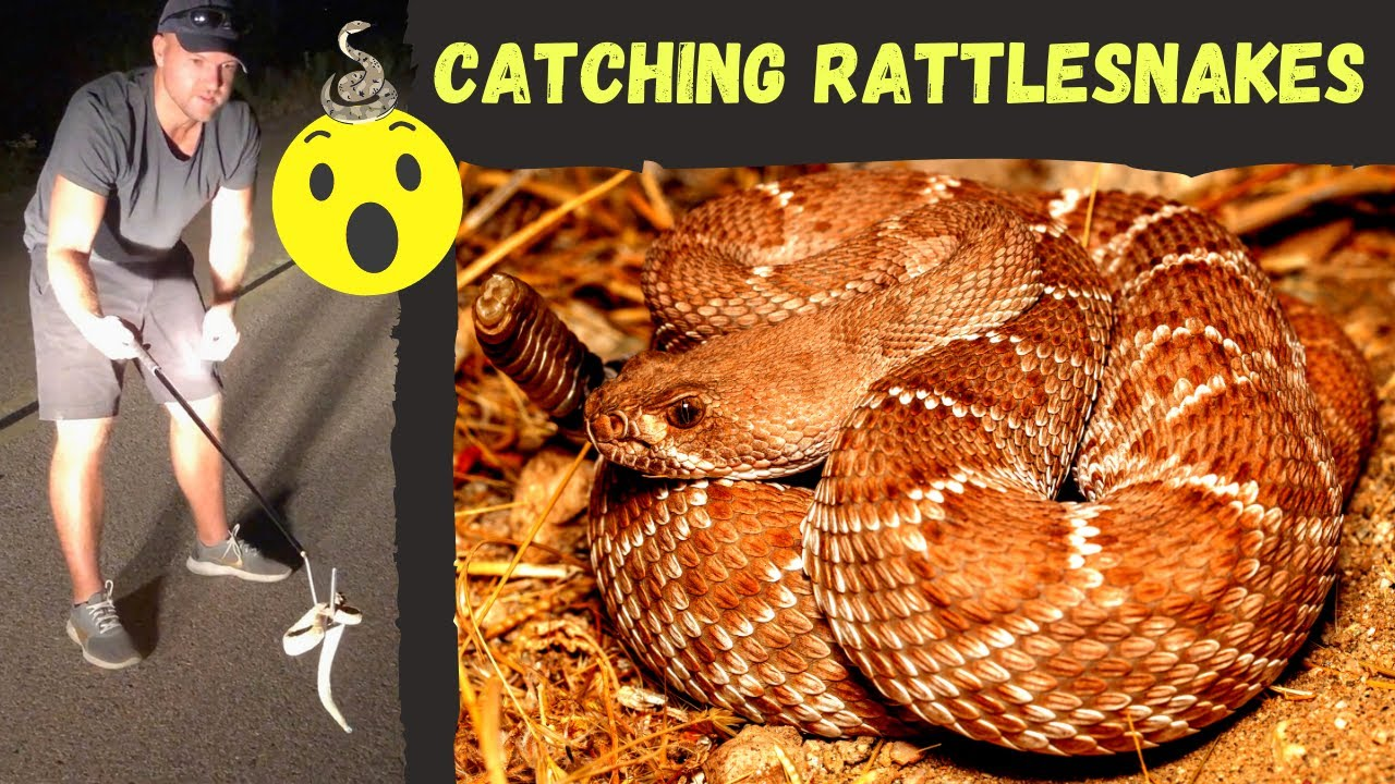 Catching Rattlesnakes Lizards Fighting Cute Box Turtle Corn Snake Gopher Tortoise And More Youtube,How To Get Rid Of Flies In Potted Plants
