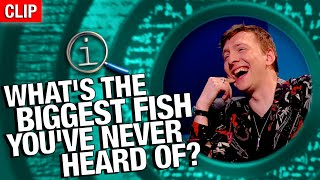 QI | What's The Biggest Fish You've Never Heard Of?