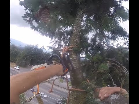 OK! ITS TIME TO CUT THIS DANGEROUS TREE DOWN NOW