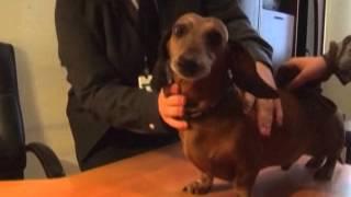 Ветеринарный контроль в аэропорту. Правила перевозки животных и птиц авиатранспортом