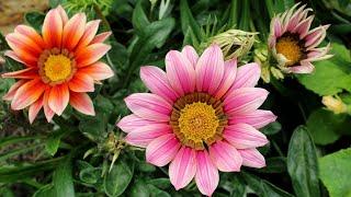 더위에 강해 여름에 키우기 좋은 꽃 6가지