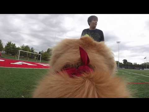 Secret Life of Peyton the Park Tudor School Dog