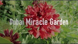 I went to Dubai Miracle Garden!