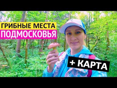 Рассекречиваю ГРИБНЫЕ МЕСТА Подмосковья! Смотрите, какие грибы и ягоды собрали в Московской области.