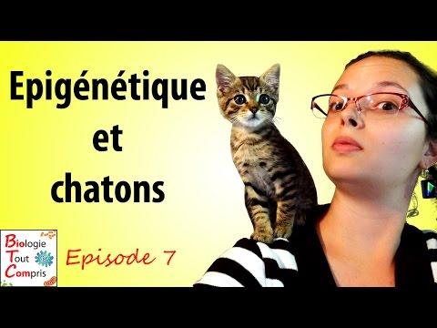 [BioTCom] 07 : épigénétique et chatons