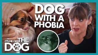 How Do You Help a Dog with a Phobia? | It's Me or The Dog