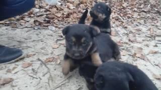 Маленькие щенки ищут хозяев. Симпатичные щенята кормятся из рук