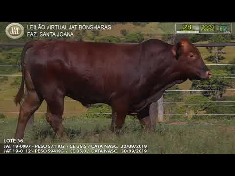 LOTE 036