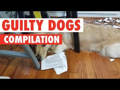 Guilty Dogs Video Compilation 2017