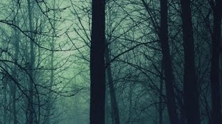 Hunger of the Pine-Alt J Lyrics
