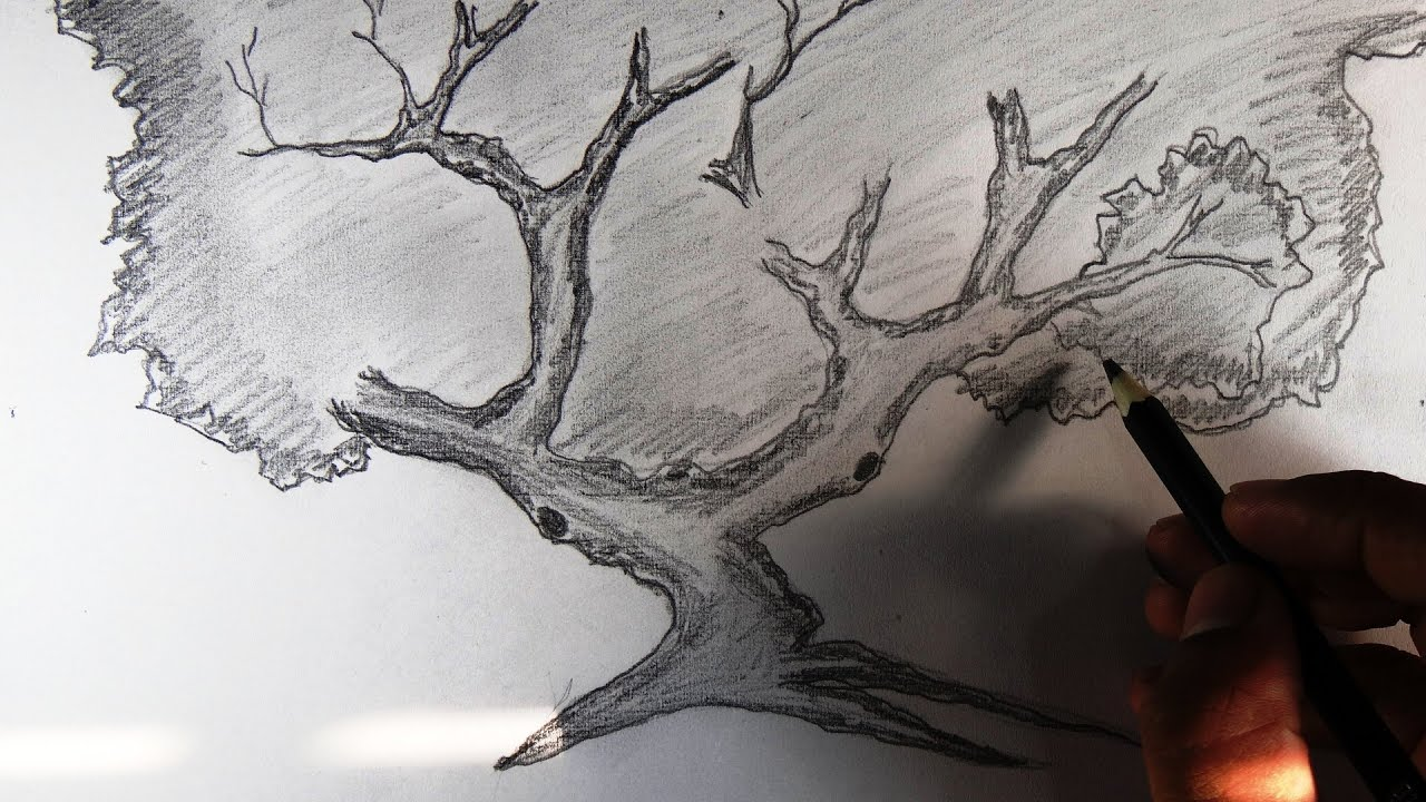 How To Draw A Tree And Branches Scenery Pencil Drawing
