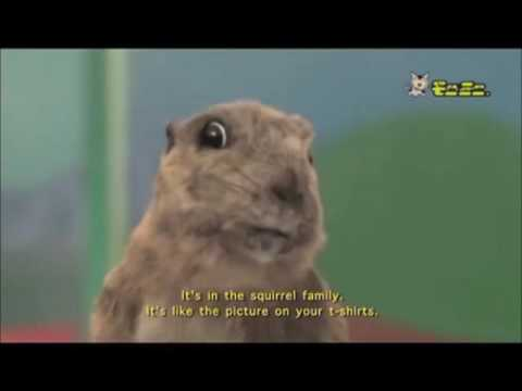 Dramatic Chipmunk Breaks Out to be continued meme