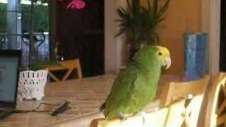 Cosmo The Parrot - Low (Flo Rida)