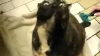 Приколы с животными  Нарезка от Skanix
