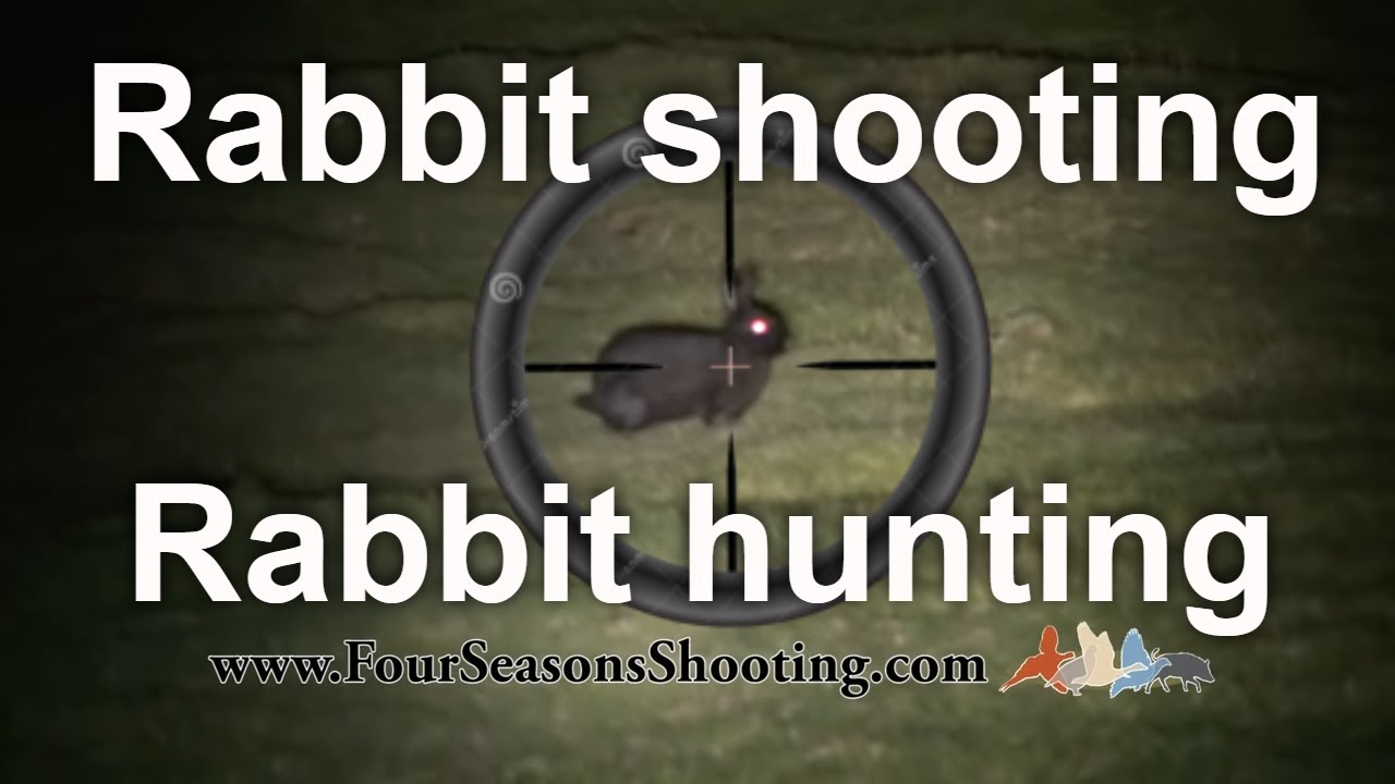Rabbit Shooting Hunting With 22 Rimfire Rifle Lamping