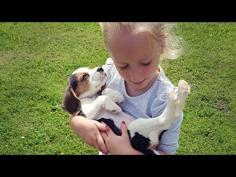 Surprising My Family With a New Puppy : Heartwarming dog and baby reaction