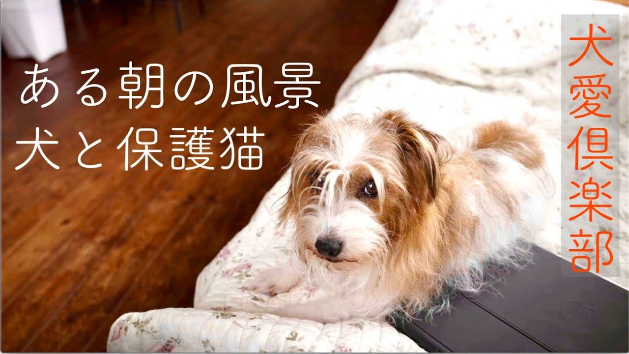 【犬&保護猫】ある朝の風景 犬も猫も仲良し ドッグトレーナーみきてぃ家のワンニャンズ#1