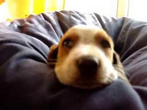 A vida dura de cão
