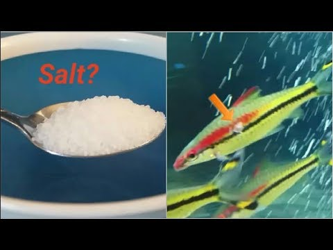 Using Salt In Freshwater Fish Tanks - All You Need To Know On Using Salt In Aquariums