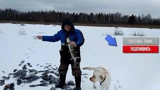 Первый лёд в Беларуси 2018- 2019.Надежды сбываются?