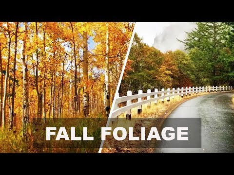 10 Epic Walks within the U.S. to savor Fall Foliage