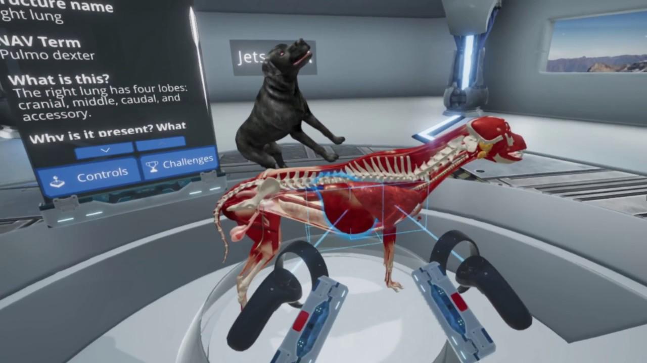 JetsonVR - Launch Trailer (2018) | Virtual Reality Canine Anatomy ...