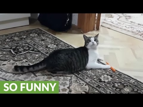 this-funny-cat-compilation-is-guaranteed-to-make-you-smile