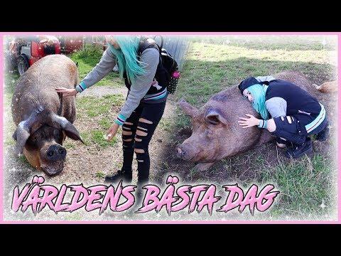 MYSA MED MASSA GRISAR! Besöker Gotlands Djurfristad