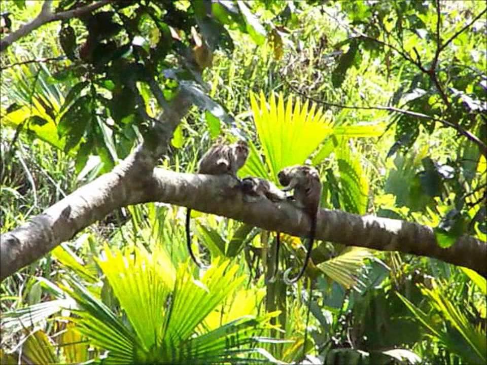 Un viaje a la selva para los mas chiquitos youtube - Mas goy fornells de la selva ...