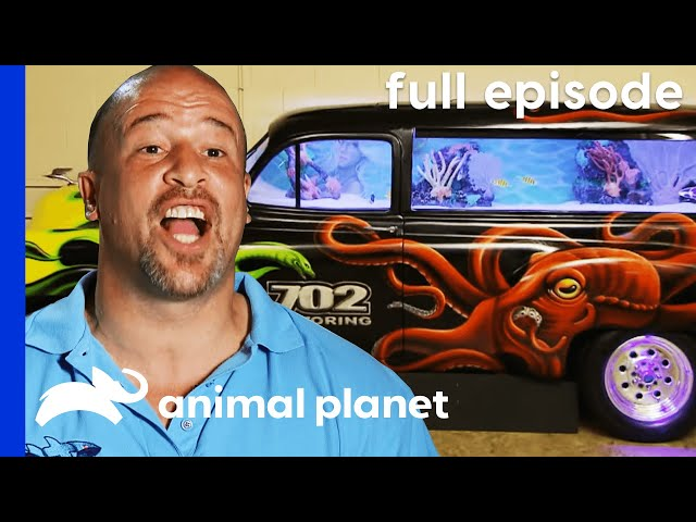 FULL EPISODE: Brett Takes a Dive (S1, E1) | Tanked