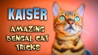 Kaiser The Amazing Bengal: Amazing Cat Tricks