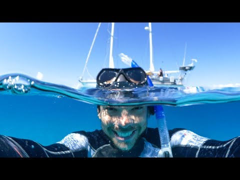 This Is Why We Love SCUBA DIVING!  Sailing Vessel Delos Ep.