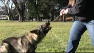 Schutzhunt Equipment ~ Solid Rubber Ball