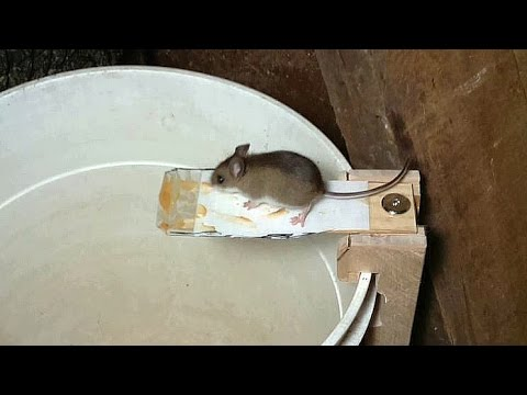 Thumbnail: Building a better mouse trap, using video surveillance