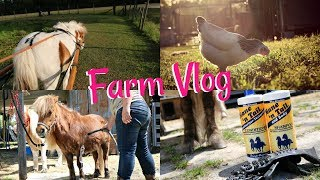 Bathing the Minis & Building Our New Chicken Coop - Barn/Farm Vlog