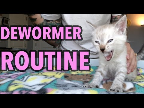 Deworming My Foster Kittens!