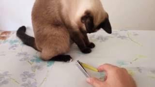 """Cutting Chon Ngoen""""s nails. Стрижка когтей"""