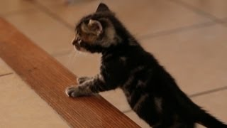 Kittens Conquer The Stairs, HEROES