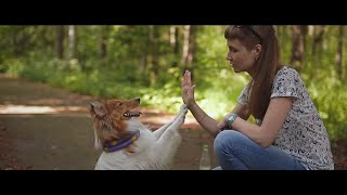 Прогулка с #шелти \ Walking with a #sheltie dog