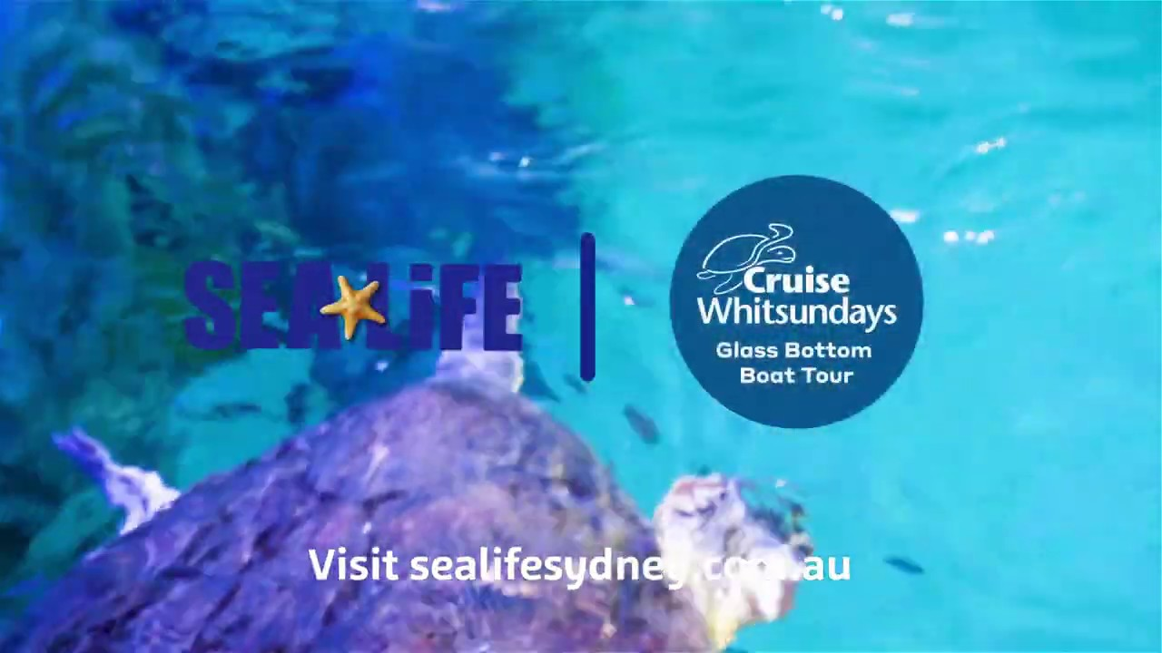 Cruise Whitsundays Glass Bottom Boat Tour | SEA LIFE Sydney Aquarium