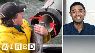 Scientist Explains Viral Fish Cannon Video | WIRED