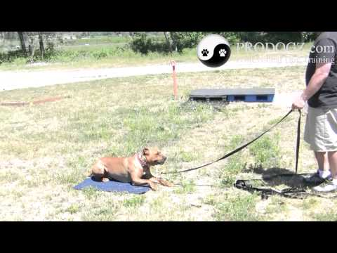 Dog Obedience Class Medford Oregon: Eric working on